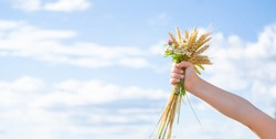 Closeup of child's hand holding beautiful bouquet of flowers and ears of wheat on the blue sky background. Bright bunch of flowers in hands. Flowers as a present