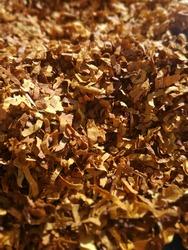 Closeup of chopped tobacco. Dry leaf with optimum humidity for smoking, choppy. Agricultural product.