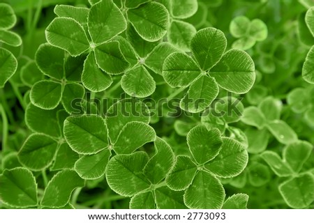 Closeup of clover