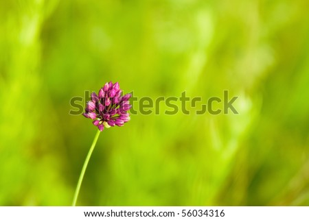 Closeup of clover on green background