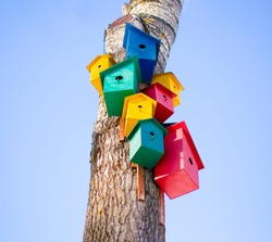 Closeup of colorful birdhouses on a tree in the center of the photo on the background of a light blue sky: bird commune, three yellow houses for birds, two pink houses for birds