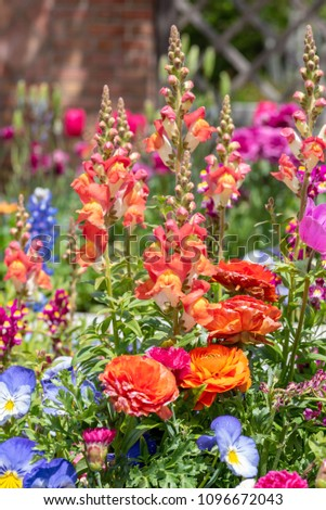 closeup of colorful spring annuals in pot in front of home #1096672043