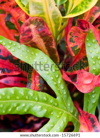 Closeup of colorful tropical plant leaves