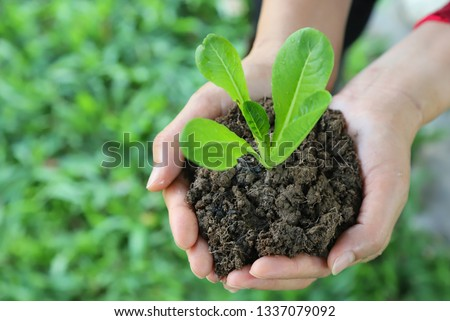 Closeup of cos vegetable sprout and soil in woman's hands with green garden background in sunny day. The symbol of self-reliance lifestyle in go-green and global friendly direction.