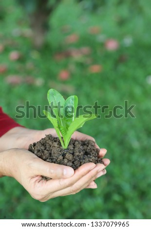 Closeup of cos vegetable sprout and soil in woman's hands with green garden background in sunny day. The symbol of self-reliance lifestyle in go-green and global friendly direction. Vertical view.