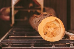 Closeup of cut pine tree log on sawing machine at wood production factory. Timber material processing and cutting at sawmill. Manufacturing process at lumber mill. Sawing woods on power machine