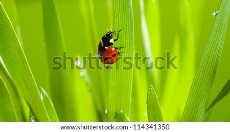 closeup of cute ladybug on fresh emerald grass