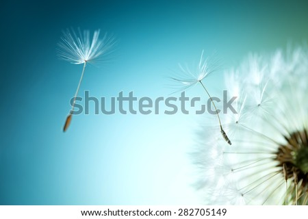 Shutterstock Closeup of dandelion on natural background