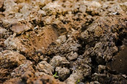 Closeup of divots of argillaceous earth and moist soil in a ploughed piece of land in Occitanie, Southern France ; example of a hard-to-work earth