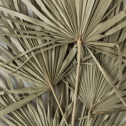 Closeup of dry tropical palm leaf isolated pattern background. Minimal floral texture composition.