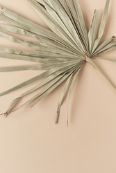 Closeup of dry tropical palm leaf. Peachy pale background. Minimal floral texture composition.
