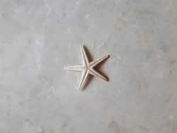 closeup of dry white starfish ( Asteroidea)