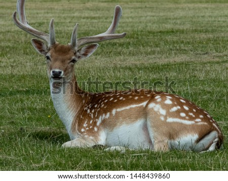 Travel Luggage Cover Fallow Deer Prairie Suitcase Protector