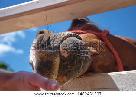 Closeup of feeding horse in manege