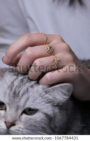 closeup of female woman with golden rings stroking cat #1067784431