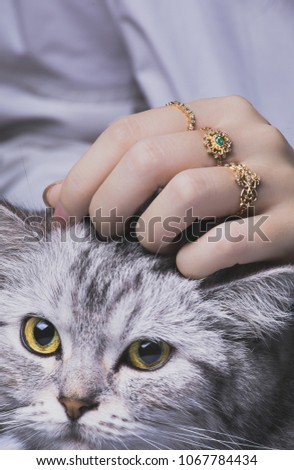 closeup of female woman with golden rings stroking cat #1067784434