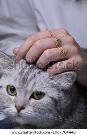 closeup of female woman with golden rings stroking cat #1067784440