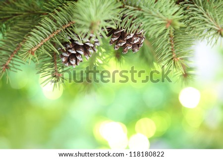 Closeup of fir branch on abstract lights background - stock photo