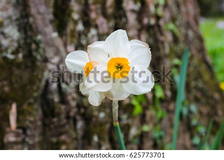 Free photos orange flower 6 avopix closeup of flower with 6 white petals and yellow center in switzerland 625773701 mightylinksfo