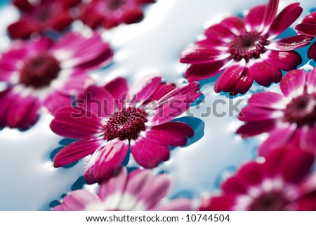 closeup of flowers floating in water