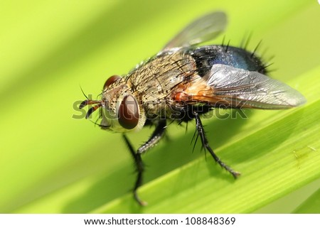 Closeup of Fly on Emergent Vegetation - Ontario, Canada #108848369
