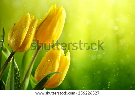 Closeup of fresh tulip flowers on green background