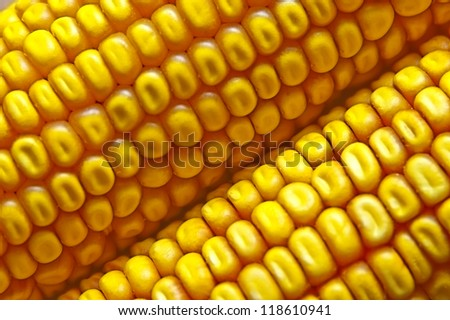 Closeup of freshly harvested corn background