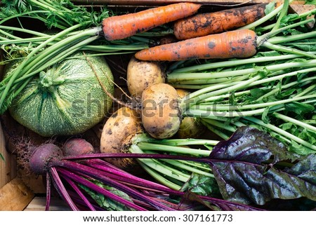 Closeup of freshly harvested vegetables (turnips, beetroots, carrots, round marrow), top view #307161773