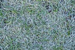 Closeup of frozen grass blades, top view