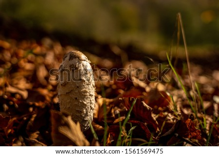 closeup of fungus in rhoen, hesse, germany Zdjęcia stock ©