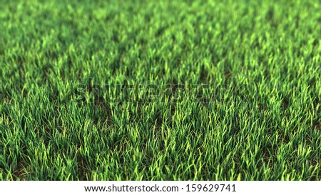 Closeup of grass field. Fresh green grass with strong blur Great for ecology background.