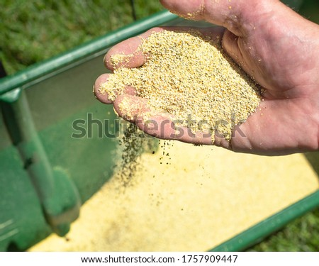 Closeup of grass lawn fertilizer and herbicide granules in man's hands, lawn chemical spreader in background, lawn maintenance program, healthy lawn care, weeding, preventing weeds