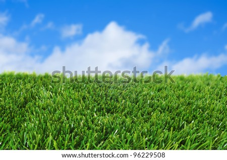 closeup of grass over the blue sky