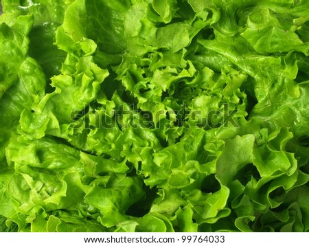 Closeup of green fresh lettuce, background