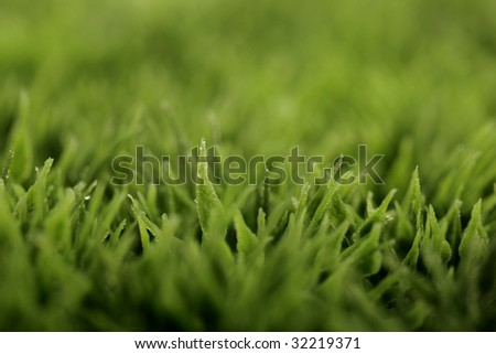 closeup of green grass with water drops