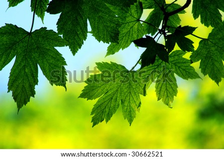 Closeup of green leaves in spring