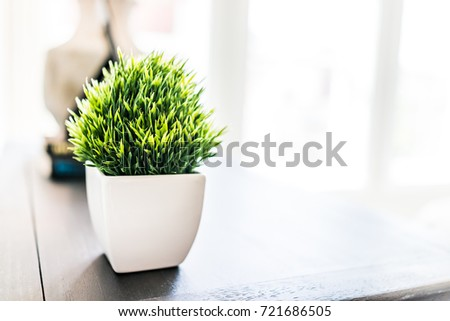 Closeup of green plant in small white ceramic flowerpot on table in minimalist staged model house interior with bright light from window #721686505