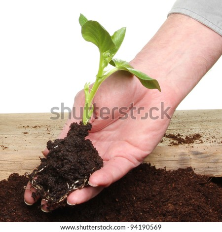 Closeup of hand holding a seedling in soil