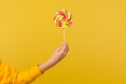 Closeup of hand holding appetizing round rainbow candy on stick, big lollipop in arm, confectionery advertising, glucose sweet foods, sugary dessert. indoor studio shot isolated on yellow background