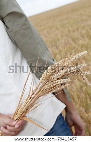 Closeup of hand holding wheat ears