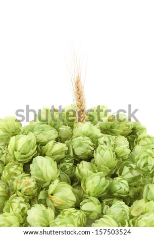 Closeup of hop and wheat ear. Isolated on a white background.
