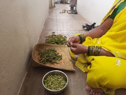 Closeup of Indian traditional dress saree wear women peeling skin of Togari Kayi or Green pigeon peas outside of the home