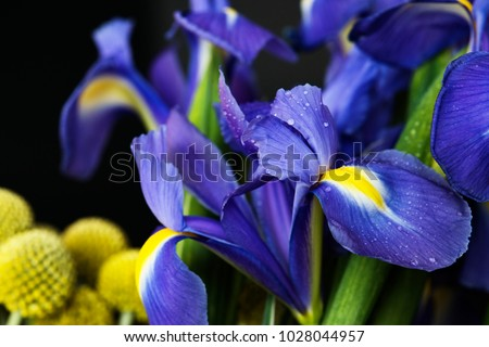 Closeup of irises flower
