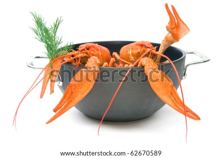 Closeup of isolated crayfish in pan on white background