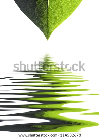 Closeup of leaf on white with simulated water ripples
