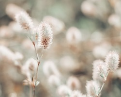 Closeup of little wildflowers, soft light background, abstract floral background, soft focus.