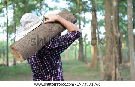 Closeup of lumberman with hat shouldering a piece of log wood n the forest in sunny day. Stock photo ©