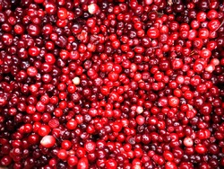 Closeup of mass of red Cranberries as Texture