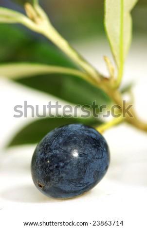 Closeup of mature olive. - stock photo