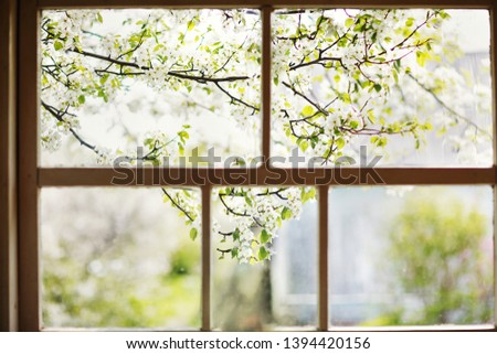 Closeup of modern white lace curtains with view through glass window on garden in spring or summer with sakura, cherry blossom flowers tree #1394420156